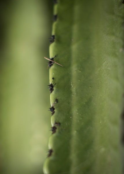 Abstract contemporary close up of a giant cactus by Teresa Berg