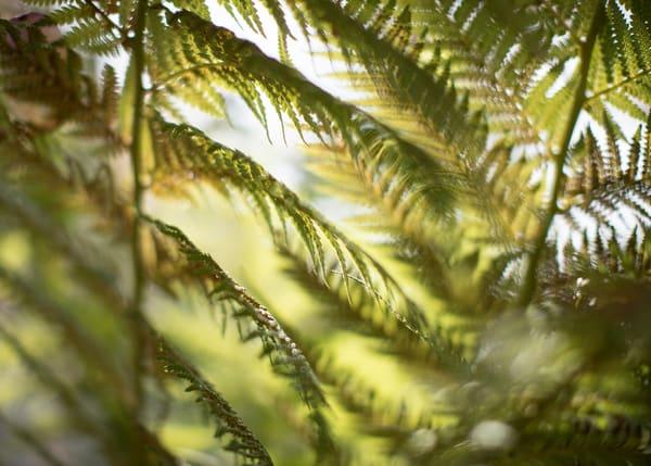 California Tree Fern Photography Art | TERESA BERG PHOTOGRAPHY