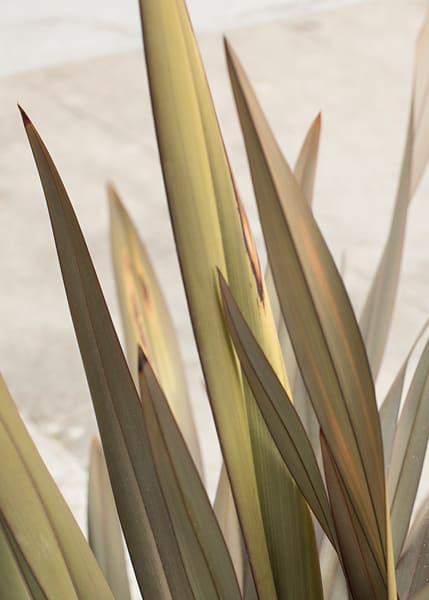 California grasses in grays and greens by Teresa Berg