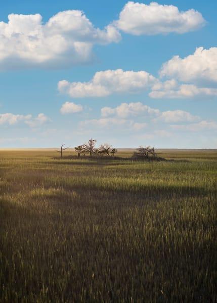 Carolina Marsh Photography Art   TERESA BERG PHOTOGRAPHY