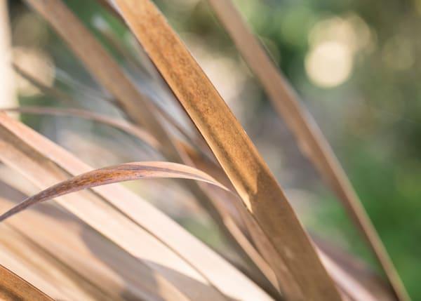 Carolina salt marsh abstract photograph