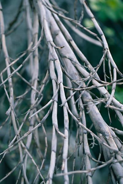 Twiggy salt marsh branches by Teresa Berg