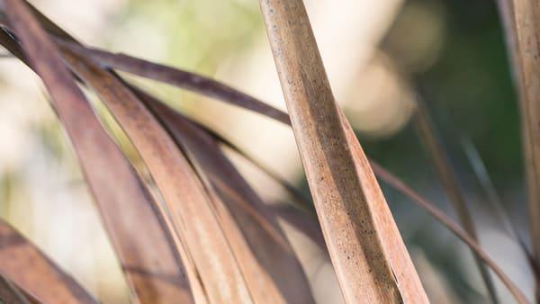 Palms drying on DeWees Island by Teresa Berg