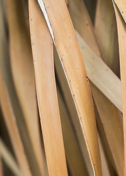 Carolina Palm abstract photograph by Teresa Berg