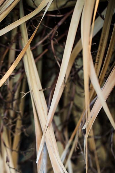 Carolina salt marsh grasses by Teresa Berg