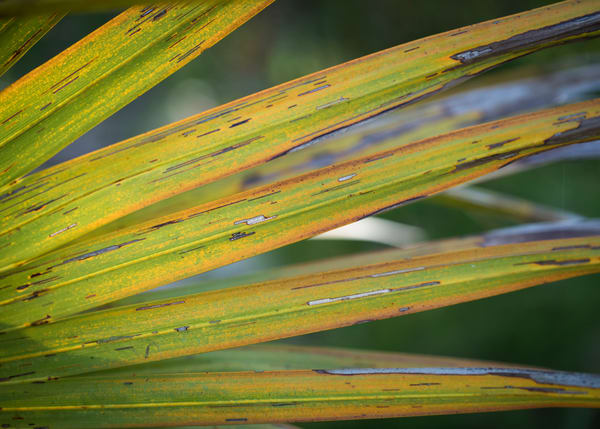 Nature abstract photos from DeWees Island, South Carolina