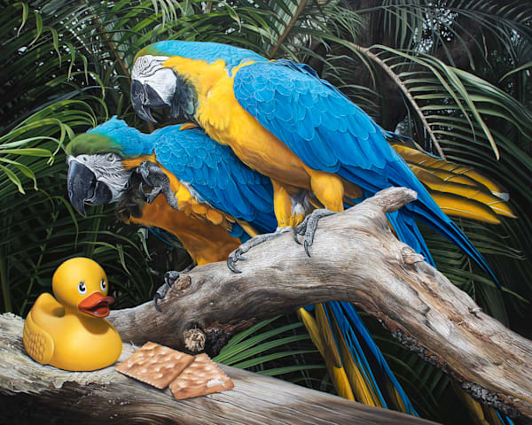 """""""Polly Wanna Quacker"""" print with macaws by Kevin Grass"""