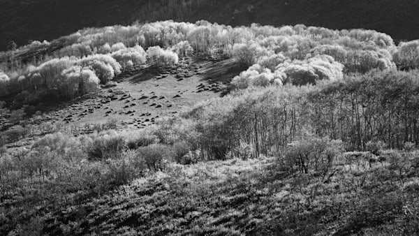 Middle Meadow Photography Art | matt lancaster art