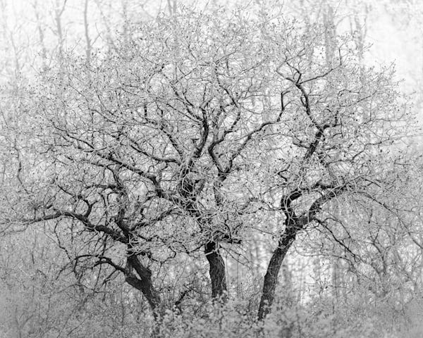 Bouquet Of Branches 1 Photography Art | matt lancaster art