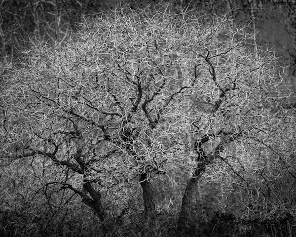 Bouquet Of Branches 2 Photography Art | matt lancaster art