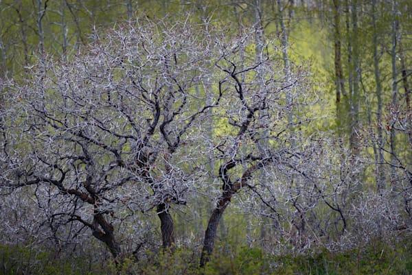 Early Season Oak Photography Art | matt lancaster art