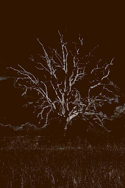 Ichabod Crane's Last Ride Photography Art | Burton Pritzker Photography
