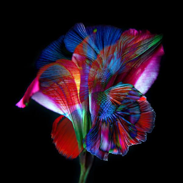 Kaleidoscope1 Photography Art | MPF Gallery