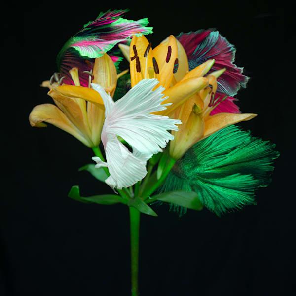 Kaleidoscope 8 Photography Art | MPF Gallery