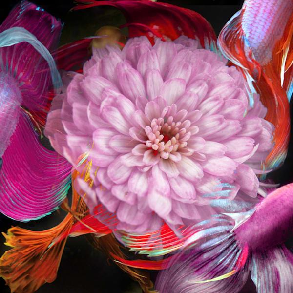 Kaleidoscope 12 Photography Art | MPF Gallery