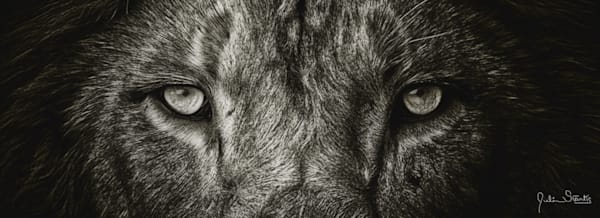 """The Lion""""S Eyes In B & W   Painted Photography Art   Julian Starks Photography LLC."""