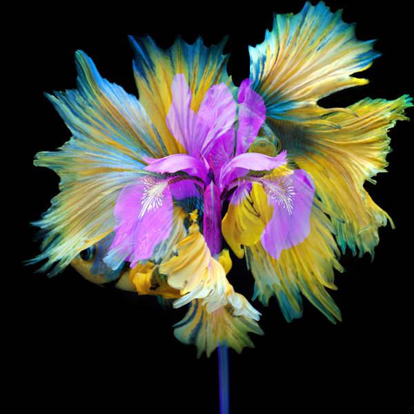 Kaleidoscope 10  Photography Art | MPF Gallery