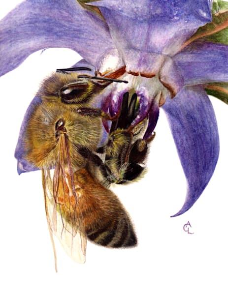 Honey Bee And Borage Art | Gossamer Lane Fine Art