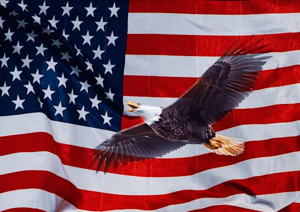 Bald Eagle Soaring with Flag Background