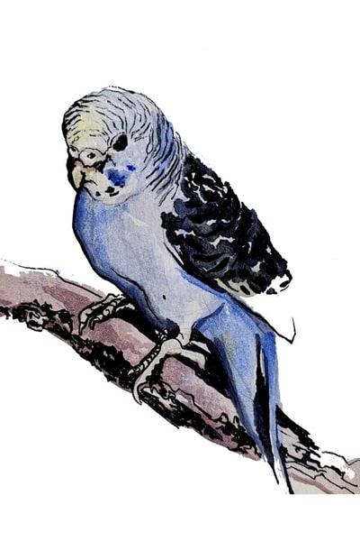 Bird Art | Christina Sandholtz Art