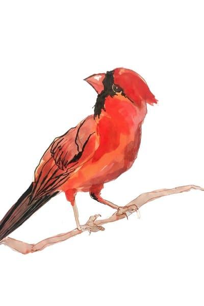 Cardinal Art | Christina Sandholtz Art