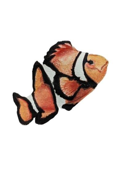 Clown Fish Art | Christina Sandholtz Art
