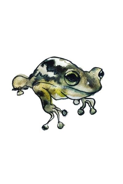Frog Art | Christina Sandholtz Art