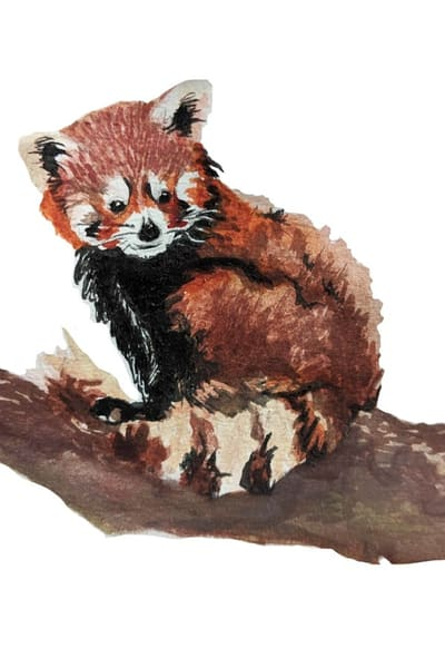 Red Panda Art | Christina Sandholtz Art
