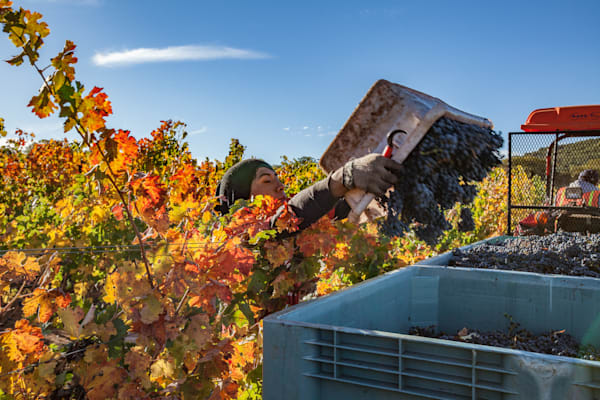Wine Country Landscapes