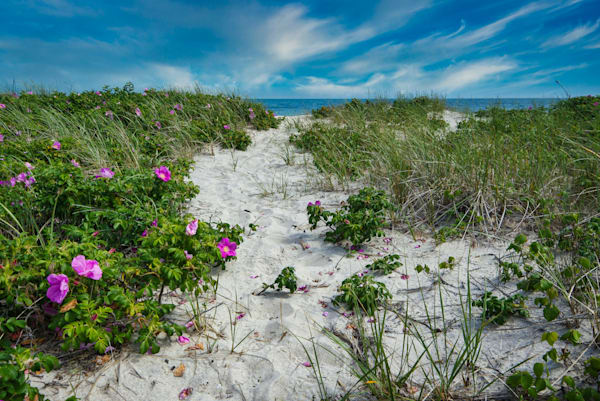 Forest Beach Path Photography Art | The Colors of Chatham