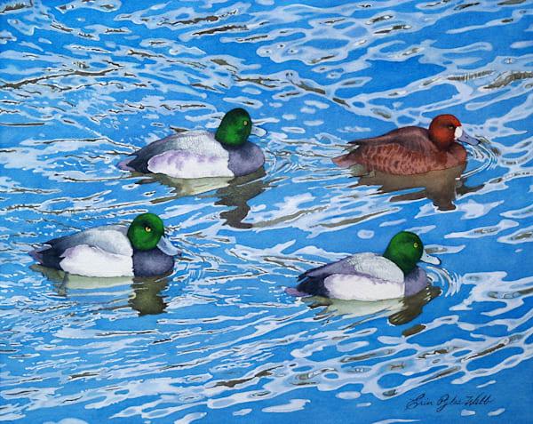 Erin Pyles Webb - Migrating Scaups - watercolor painting