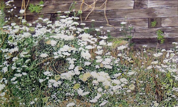 Queen Anne's Lace watercolor painting by Erin Pyles Webb