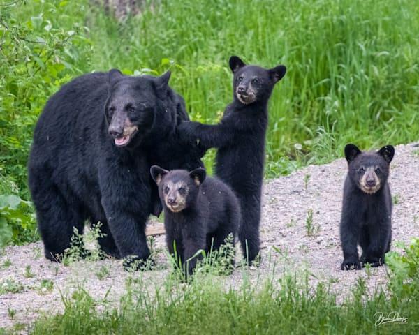 Black Bear Family Photography Art | brucedanz