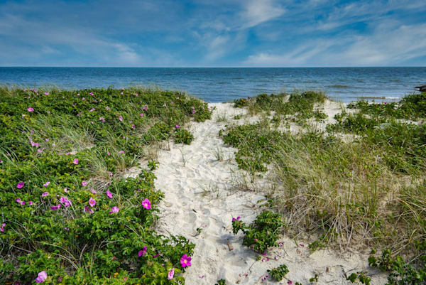 Forest Beach Path V2 Photography Art | The Colors of Chatham