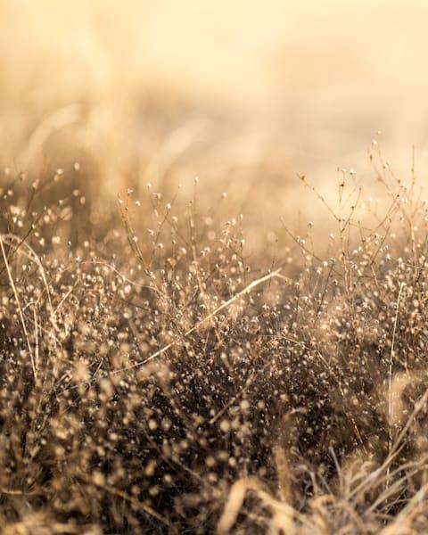 Golden field of Weeds by Teresa Berg