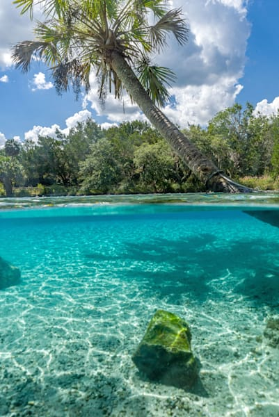 Natural Florida Oasis Photography Art   kramkranphoto