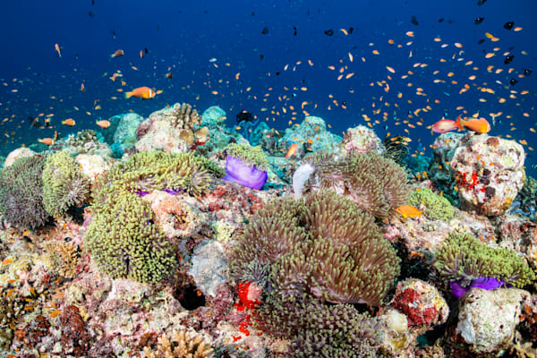 Lively Reef is a fine art photograph available for sale