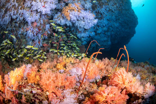 Soft Coral Paradise is a fine art photograph available for sale.