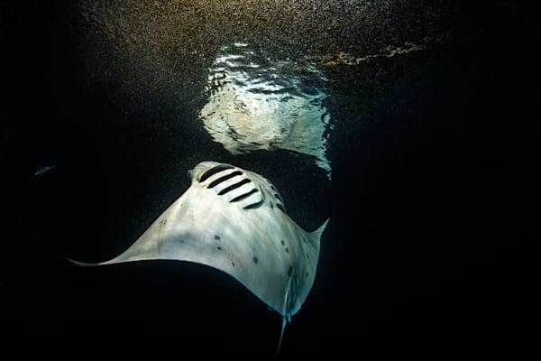 Manta Feeding on Plankton is a fine art photograph available for sale.