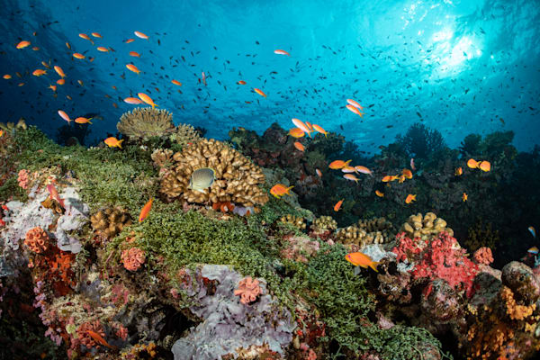 Colorful Coral Reef is a fine art photograph available for sale