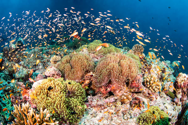 Busy Reef is a fine art photograph created underwater and available for sale.