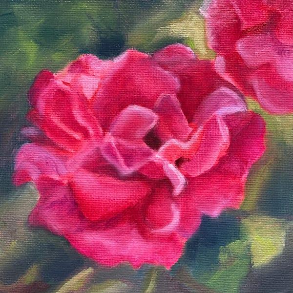 Double Knockout Rose Art   Jennifer Zardavets Art