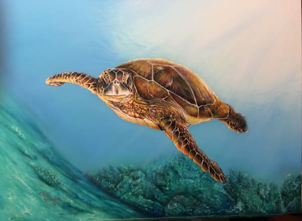 Wildlife, Sea Life and Seascapes