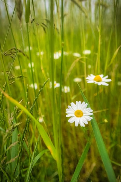 Simplicity Photography Art | Teaga Photo