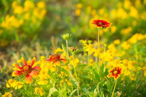 Pro Photo Va Rodanthe Beach Flower 1 Photography Art | Professional Photography of VA LLC