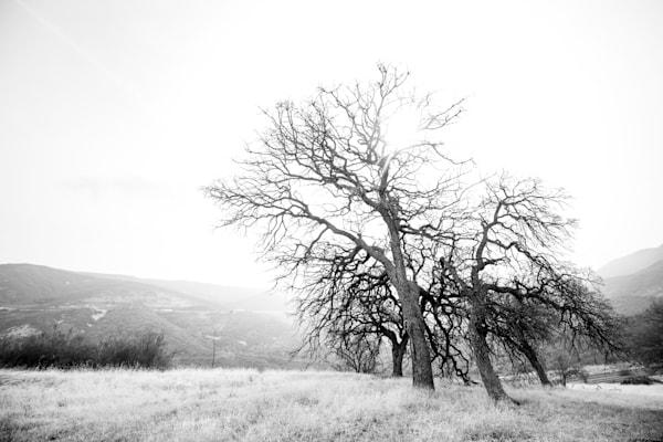 Freeform Photography Art | Sydney Croasmun Photography