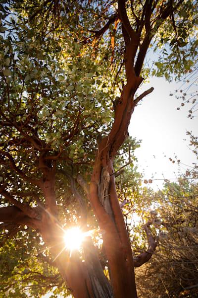 Manzanita Daydreams Photography Art | Sydney Croasmun Photography