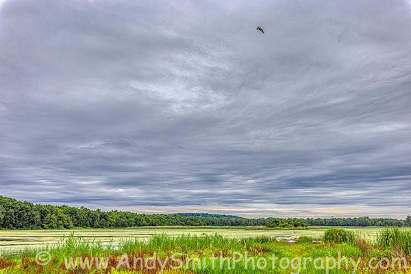 Osprey Above Hyper Humus Art | Andy Smith Photography