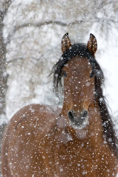 #5 Snow Stallion Art | Living Images by Carol Walker, LLC
