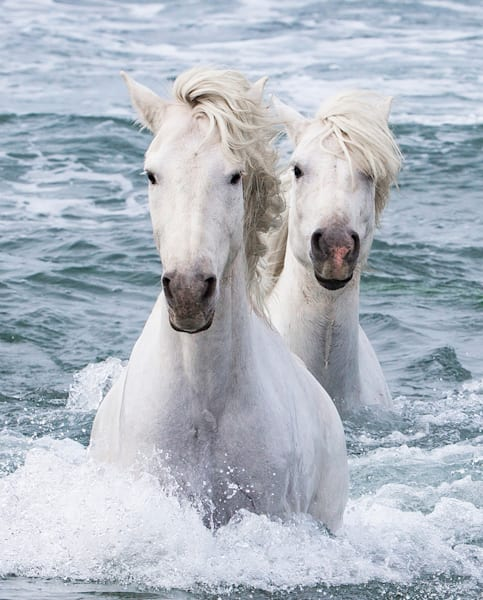 #10 Sea Horse Twins Art | Living Images by Carol Walker, LLC